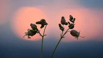 «Es ist Zeit, auf der Veranda oder dem Balkon zu Hause zu sitzen und der Sonne beim Untergehen zuzusehen. Und zu träumen.»