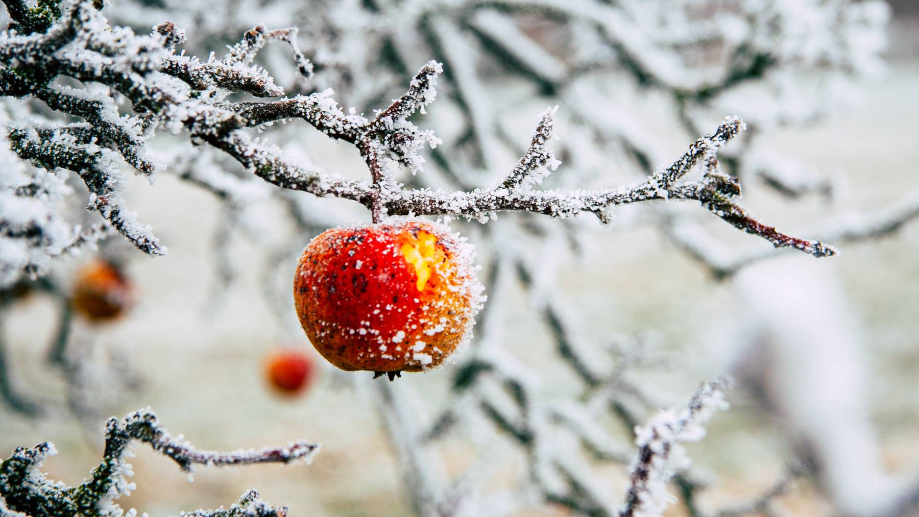 Apfel-Frost_Unsplash