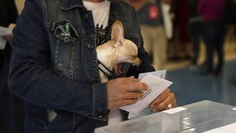 Die Beteiligung bei der Europawahl ist nach jahrzehntelangem Abwärtstrend erstmals wieder deutlich gestiegen - auf dem Bild ein Wähler in Barcelona mit tierischer Unterstützung.