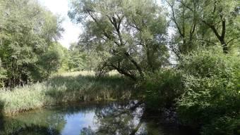 Nahezu unberührte Natur findet man in den Seitengewässern der Limmat.