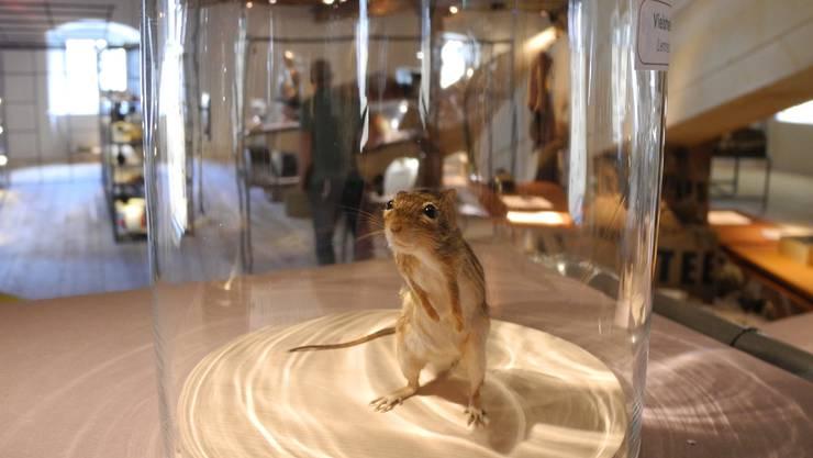 Die Maus beschäftigt den Menschen schon seit langer Zeit – nun ist ihr in Liestal eine Ausstellung gewidmet.
