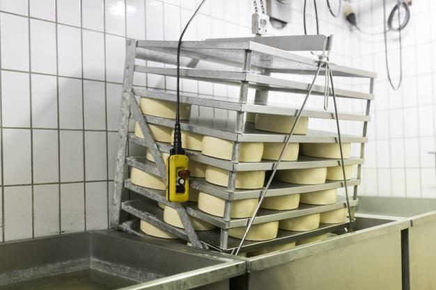 Hier werden die Käselaibe gebadet, in der Spezialitätenkäserei von Sepp Brülisauer in Künten, am 23. Januar 2018.