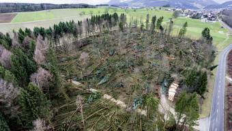 "Sturm ""Burglind"" zerstört Wald in Kestenholz SO"