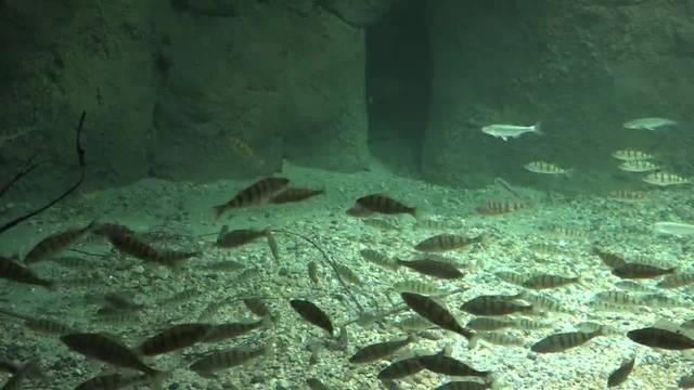 Grösstes Süsswasser-Aquarium Europas eröffnet