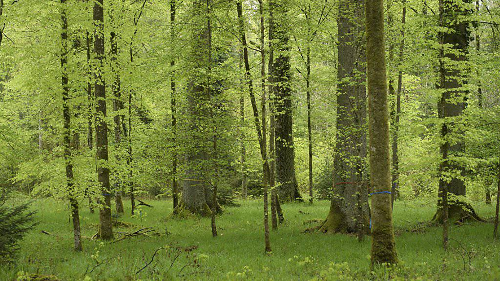 Bäume gegen den Klimawandel