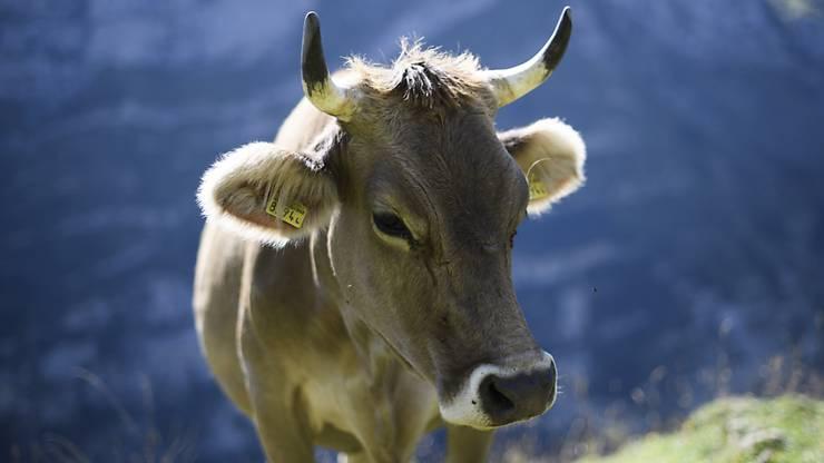 Das ist noch eine richtige Kuh, befinden die Initianten der Hornkuh-Initiative. (Archiv)