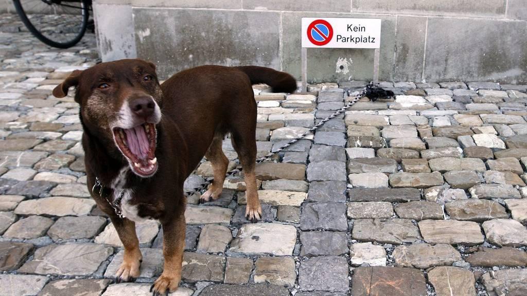 Ein Hund schlägt in Steinach zwei jugendliche Angreifer in die Flucht (Symbolbild)