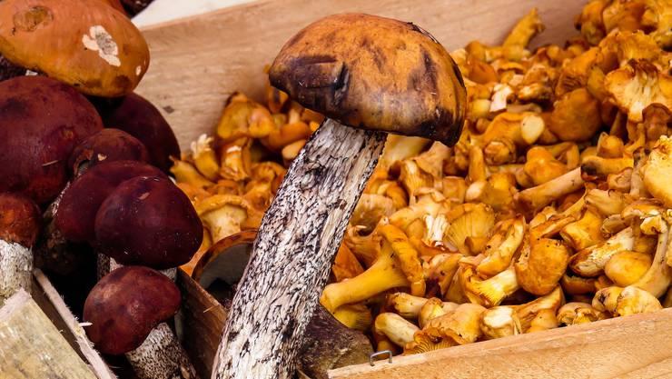 Paradies für alle Pilzliebhaber: Jetzt fängt eure Saison wieder an.