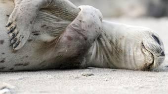 Die Petition fordert ein Import-Verbot für Robbenprodukte