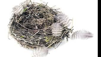 Von wegen «Alle Vögel sind schon da»: Seit einigen Jahren gehen die Vogelbestände auf der ganzen Welt zurück. Bild: Shutterstock
