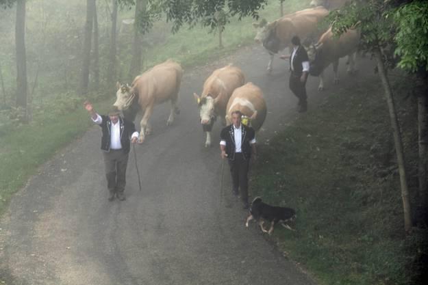 """""""Endlich Viehschau!"""" Die Freude darüber ist Ueli Kamber (l.) vom Oberen Passwang, Ramiswil, ins Gesicht geschrieben. Neben ihm Walter Gisin und hinten Sohn Adrian"""