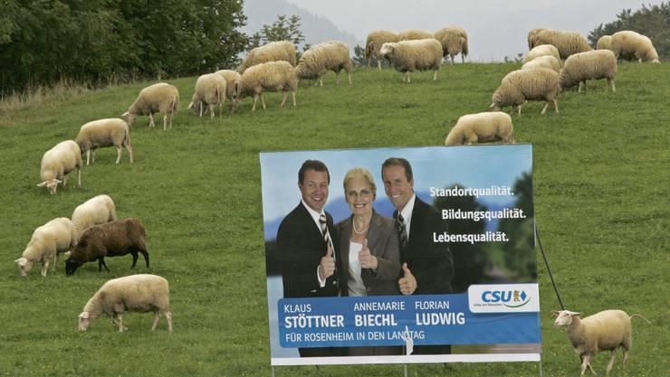 in Deutschland (siehe Bild) bereits Standard, in vielen Schweizer Städten ebenfalls: Politische Plakate an allen möglichen Standorten, sogar auf einer Schafweid.