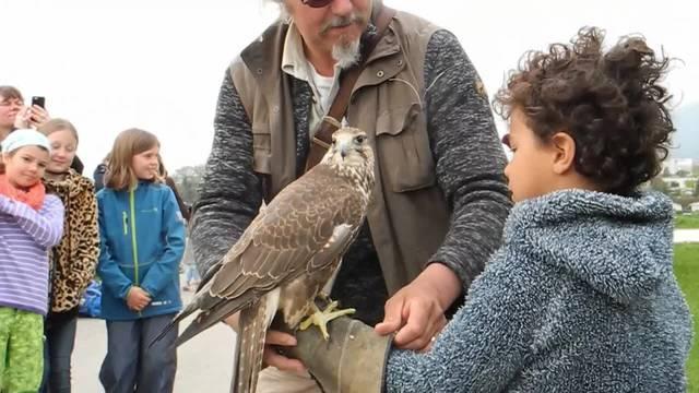 Mit dem Ferienpass Langendorf Greifvögel kennenlernen
