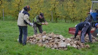 Steinhaufenanlegen zugunsten von allerlei Kleingetier gehört zu den Klassikern an den Naturschutztagen.