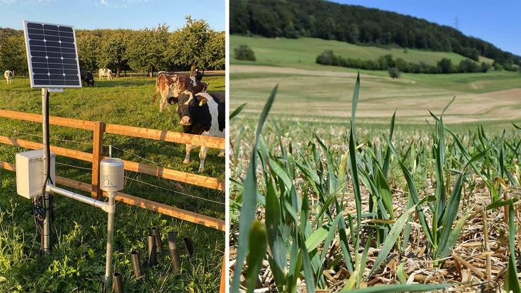 Zu nass oder zu trocken: Am Rande einer Kuhweide (links) werden Daten über die aktuelle Bodenfeuchtigkeit gesammelt.