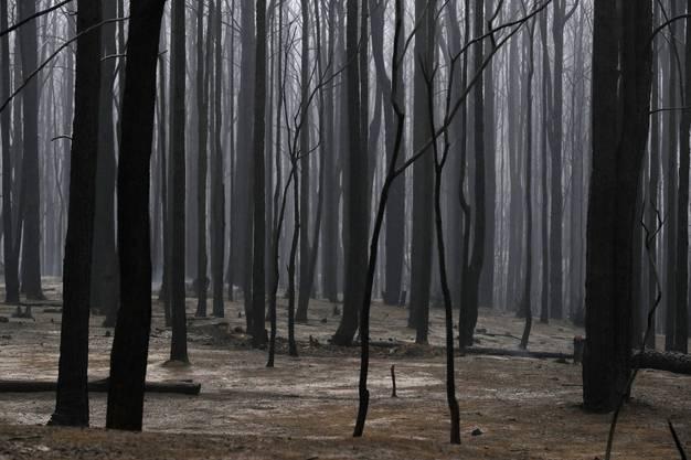 Verkohlter Wald im Kangaroo Valley.