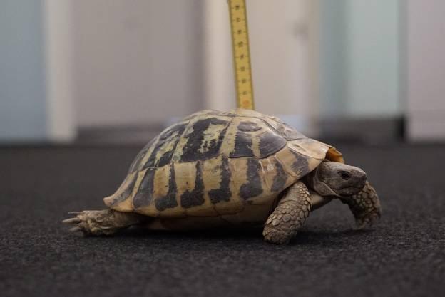 Die Stadtpolizei Zürich suchte den Besitzer oder die Besitzerin des Reptils.