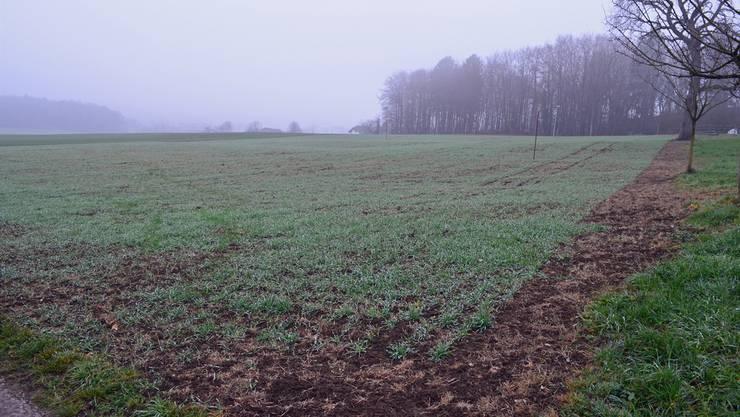 Auf den Feldern von Markus Dietschi wird der Boden nicht mehr umgegraben, sondern nur noch gelockert, um die Bodenerosion einzudämmen.