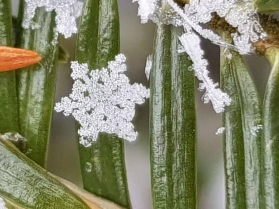 Schneekristalle am Montagmorgen