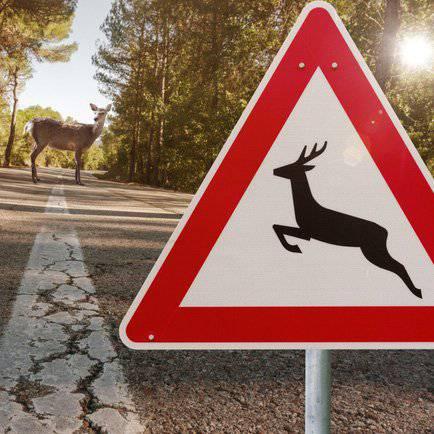 FM1 Tipp: Was tun bei Unfall mit Wildtier?