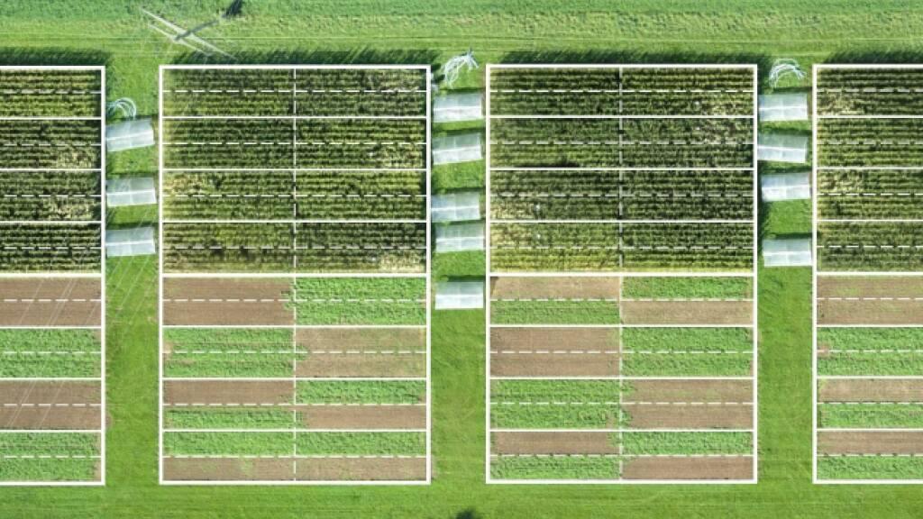 Biolandbau: Mehr Umweltschutz geht mit weniger Ertrag einher