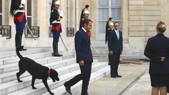 """Emmanuel Macron führt seinen Hund """"Nemo"""" die Treppe des Elysée-Palastes hinunter. Der französische Präsident hat das Tier adoptiert."""