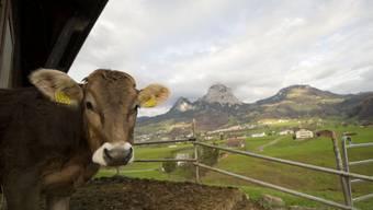 """Um die tierischen Produkte wurde am meisten gerungen. Produkte von Tieren sind dann """"Swiss Made"""", wenn das Tier in der Schweiz gehalten wurde."""