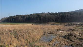 Für die geplante Inertstoffdeponie müsste ein Teil dieses Waldes im Bereich «Bergmatt» gerodet werden.