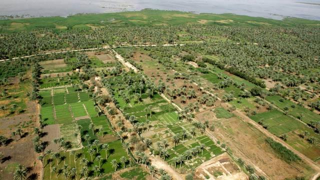 Braucht viel Wasser: Palmenplantage am Ufer des Euphrat im Irak (Archiv)