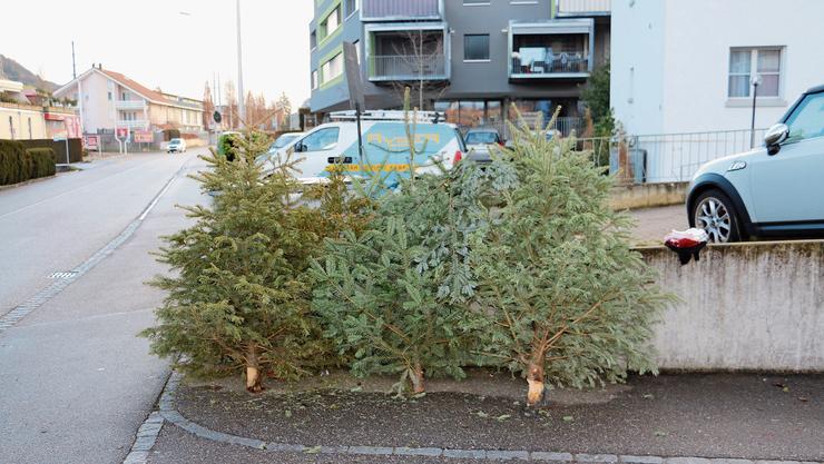 Ausgedient: Mehrere Weihnachtsbäume warten in der Fricker Widengasse auf einen Abholer.