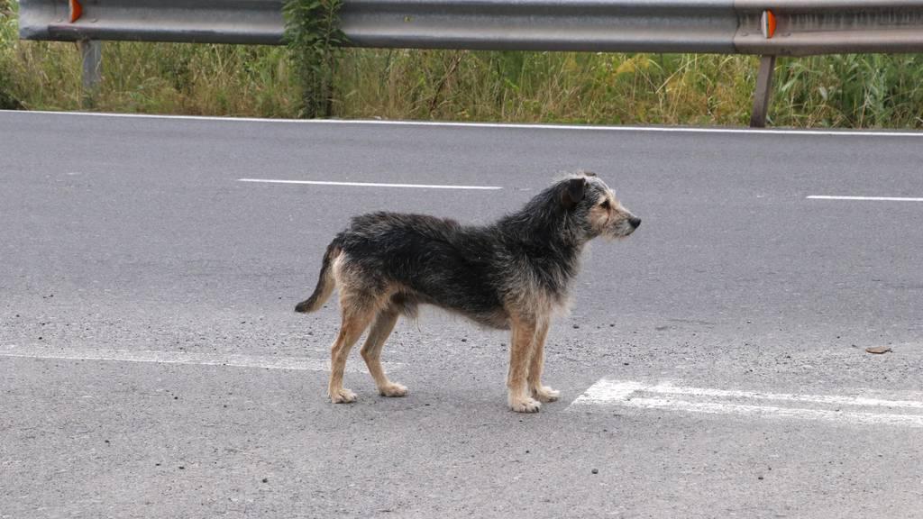Ein ausgebüxter Hund verursachte Unfall im Stephanshorntunnel