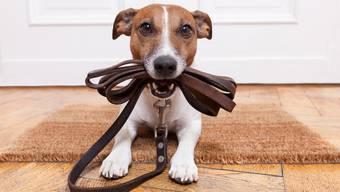 Hundehalter aufgepasst: Ihre Lieblinge sollen in Basel-Stadt künftig vermehrt an die Leine genommen werden müssen.