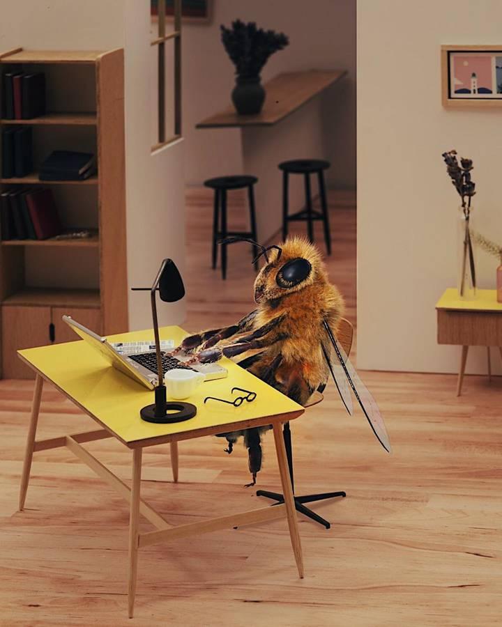 Eine Biene wird Influencerin (© Instagram/bee_nfluencer)
