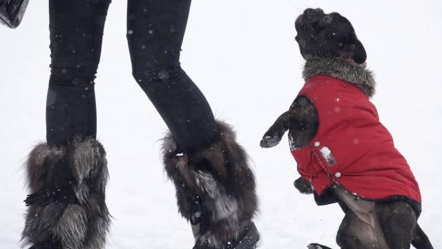 Hund und Bein mit Pelz am St. Moritz Polo World Cup (Archiv)