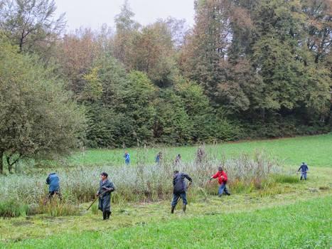 Natur- und Vogelschutzverein Niederrohrdorf