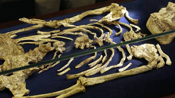 Das Skelett wird im südafrikanischen Johannesburg ausgestellt.