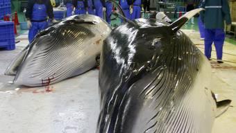 Zwei erlegte Wale in einer japanischen Fischfabrik (Symbolbild)