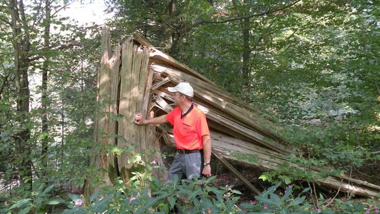 Wunden verheilt, Narben bleiben: Stimmungsbild aus dem Lenzburger Wald. Fotos: Forstdienste Lenzia
