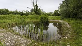 Kommunale Naturschutzzone Grüttbach