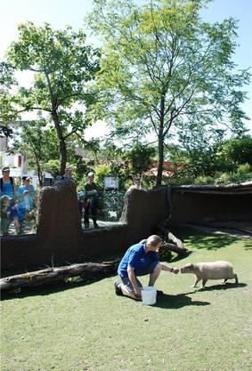 Bettina Aeschbach füttert ein Capybara – wie immer vor Publikum.