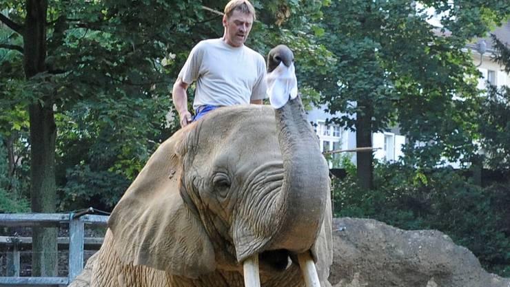 Ein Bild der Vergangenheit: Pfleger haben künftig keinen direkten Kontakt mehr zu den Elefanten im Basler Zoo. Kenneth Nars