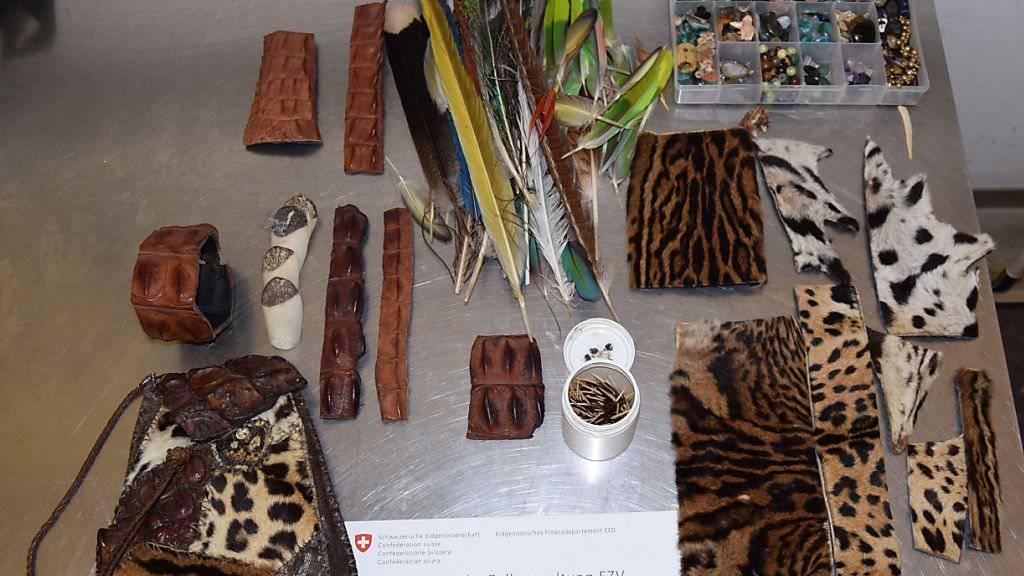 Der Artenschutz-Spürhund erschnüffelte im Gepäck des Strassenhändlers Waren aus Fellen und Federn artgeschützter Tiere.