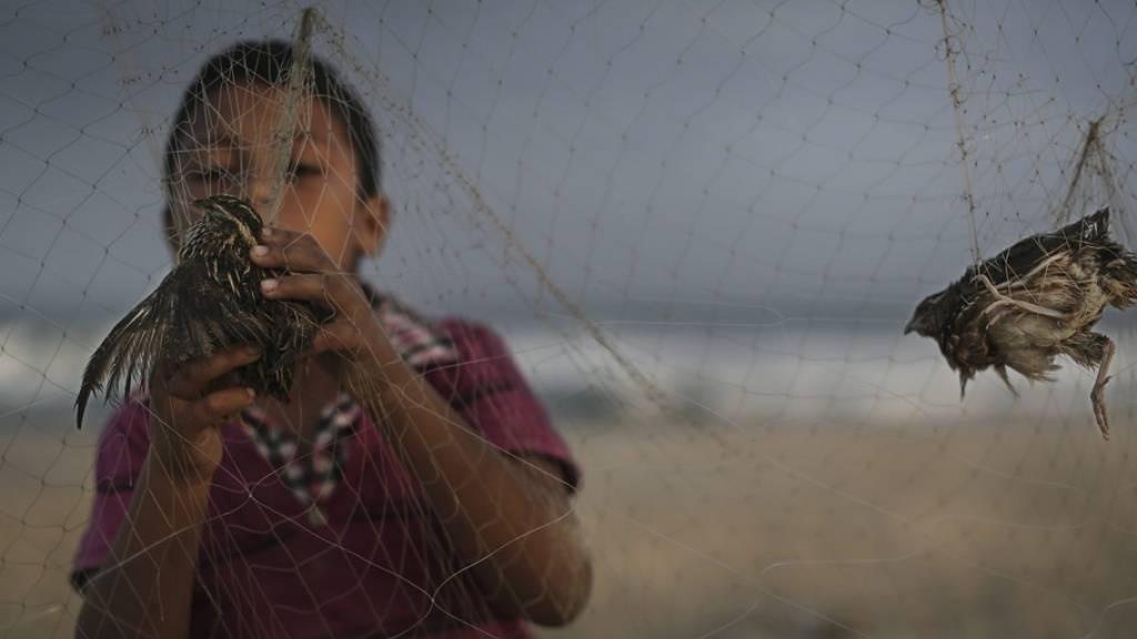 Ein Kind am Strand von Gaza klaubt im Morgengrauen Zugvögel aus Fangnetzen, um sie für umgerechnet zwei Franken auf dem Markt zu verkaufen. Vogelwilderei ist ein Thema am internationalen EuroBirdwatch, der in der Schweiz mit über 50 Veranstaltungen begangen wird. (Symbolbild)