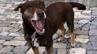 Bellende Hunde lassen die Nachbarn nachts nicht schlafen (Symbolbild)