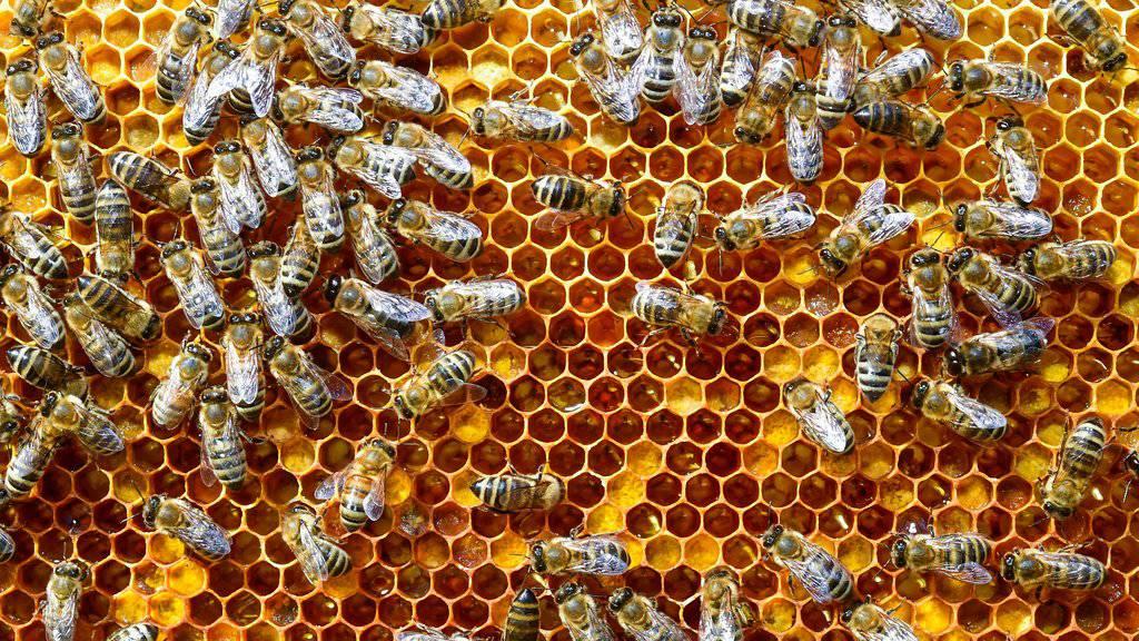 In der Ostschweiz gab es noch nie so wenig Honig