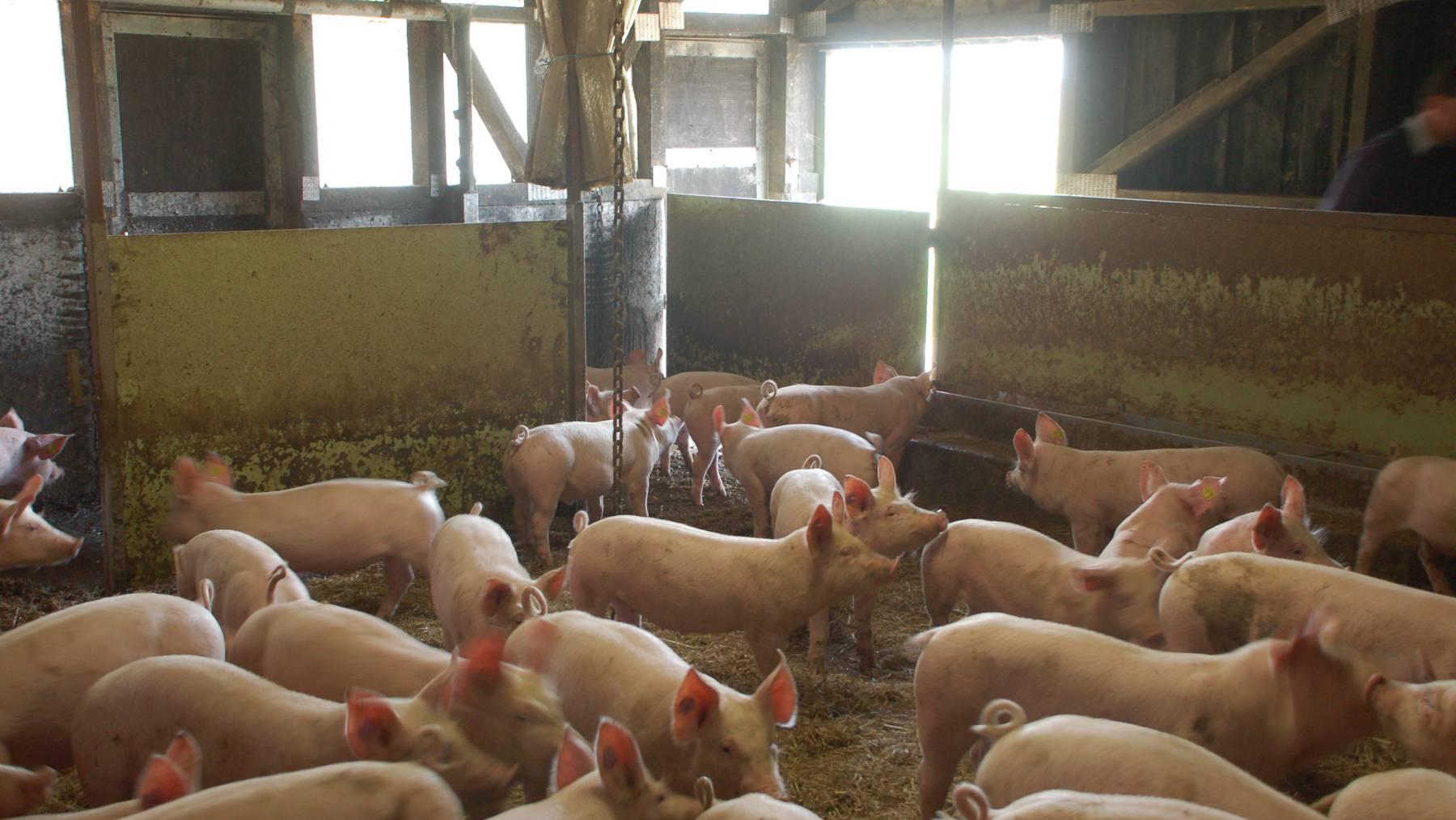 Durchschnittliches Jahr für Schweizer Bauern