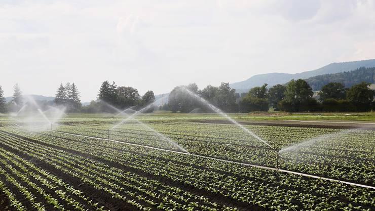 Auf Furttaler Gemüsefeldern soll Limmattwasser aus den Bewässerungsanlagen sprenkeln – die Beteiligten begrüssen das Projekt.