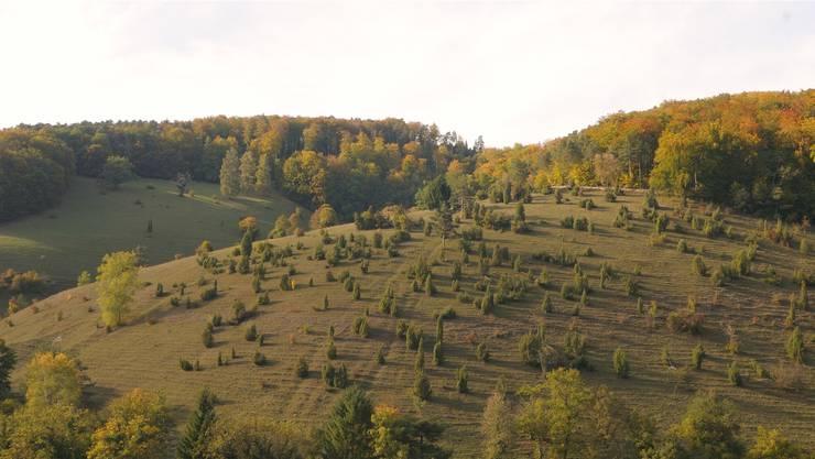 Die Dittinger Weide ist mit 500 Blütenpflanzen die wertvollste unter den vier grossen Laufentaler Magerweiden; im Vordergrund ist der Etter zu sehen. Fotos: Dieter Thommen