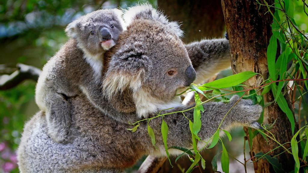 Faszination Australien