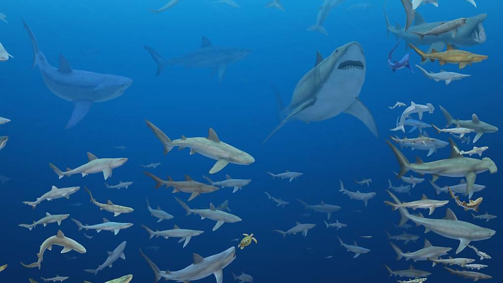 Spezialisierter Speiseplan wurde Haien zum Verhängnis